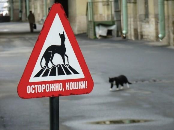 Знак Осторожно, кошки