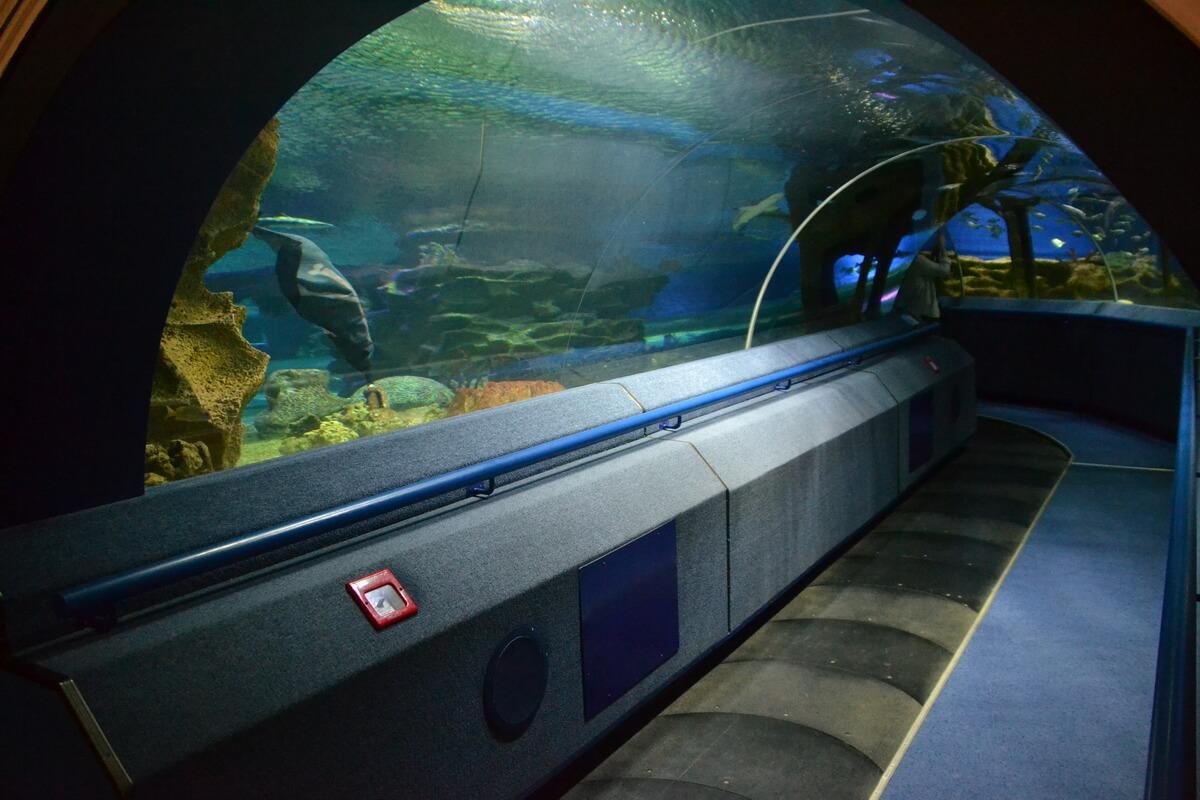 Аквариум-тоннель