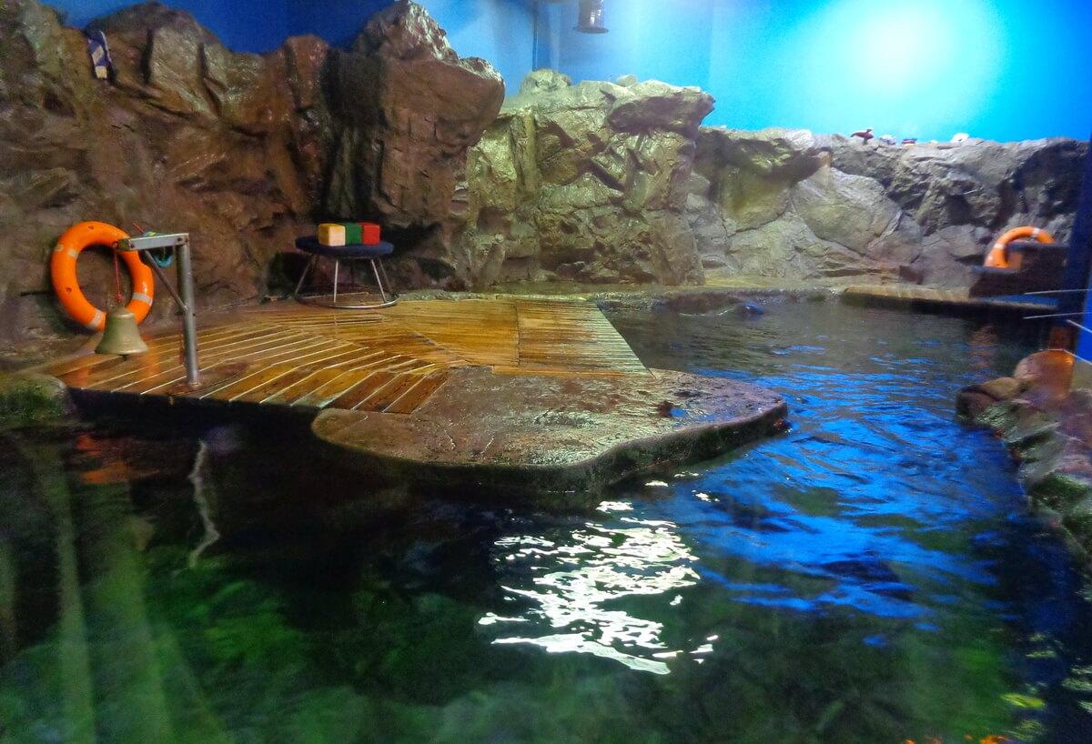 Здесь проходит шоу тюленей