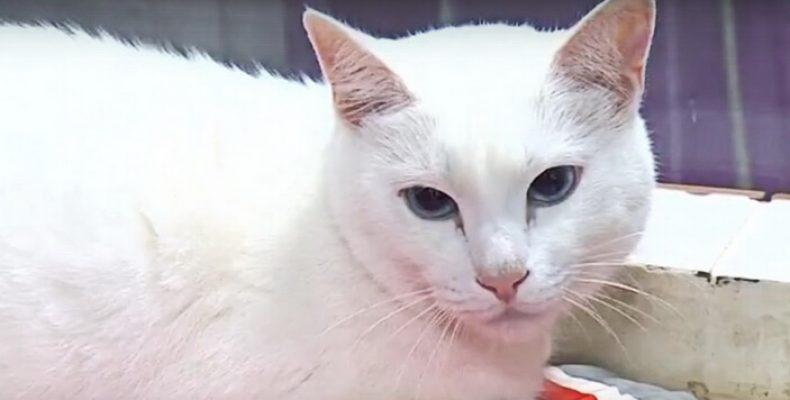 Эрмитажный кот Ахилл предскажет исходы петербургских матчей ЧМ