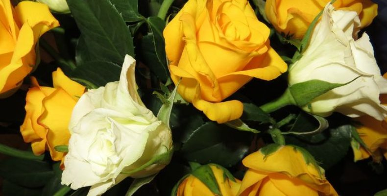 Где недорого купить цветы в Петербурге