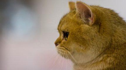МимиFEST для любителей животных пройдет в Ленэкспо 25 и 26 мая