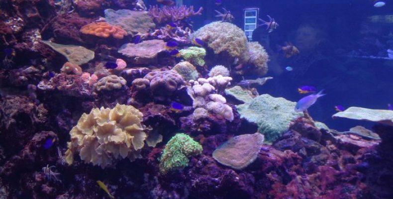 Океанариум в Петербурге: утоните… во впечатлениях!
