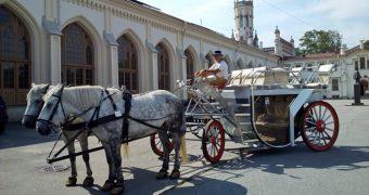 Катание верхом на лошадях и в дилижансе по улицам и паркам Петергофа