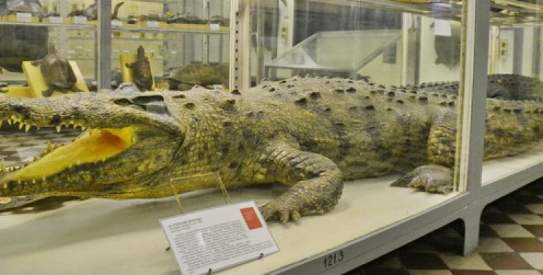 Зоологический музей СПб: адрес, время работы и стоит ли идти