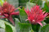 В Ботаническом саду пройдет выставка орхидей «Осколки радуги»