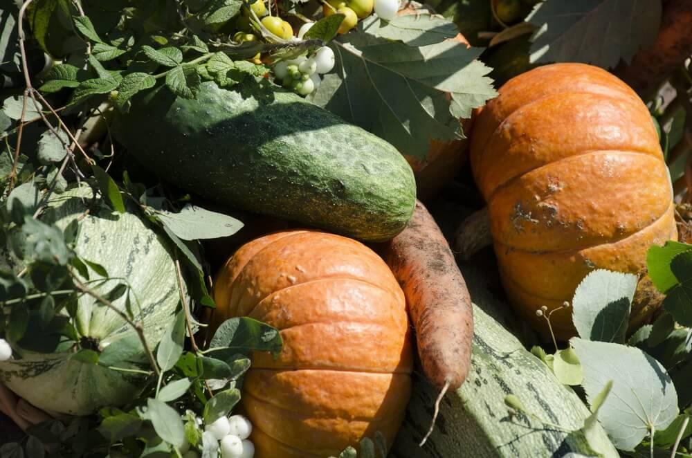 Экологически чистые овощи на ярмарке Агрорусь