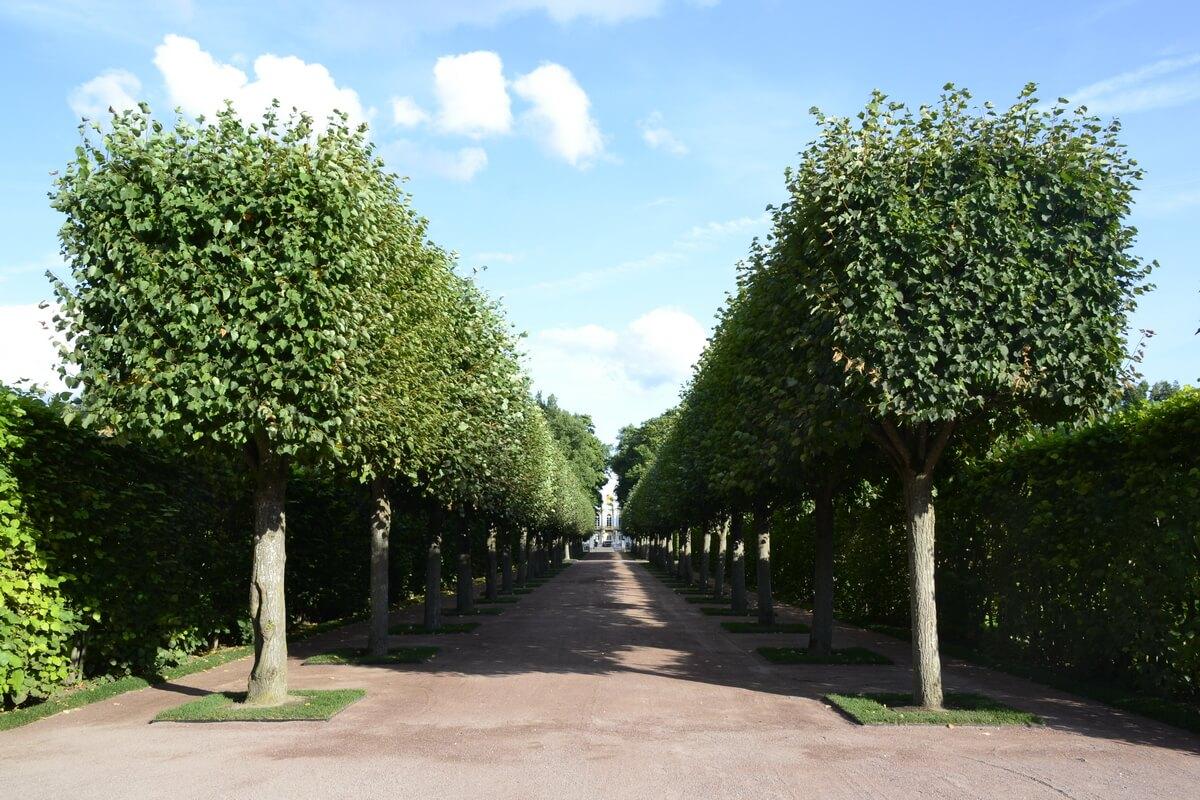 Екатерининский парк в Пушкине