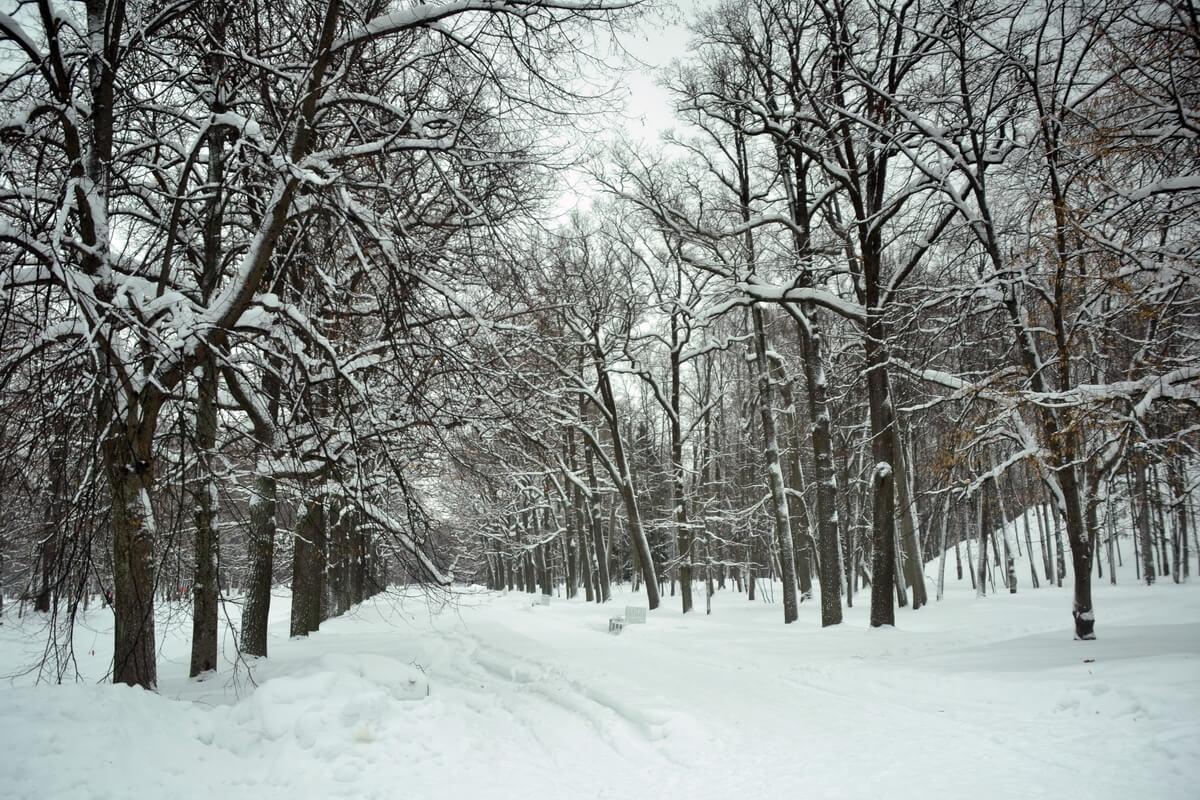 Александровский парк зимой