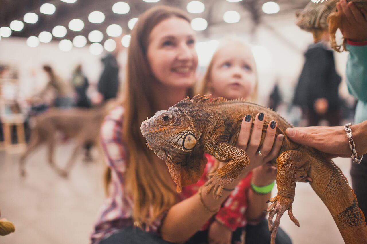 Посетителей ждет выставка террариумных животных