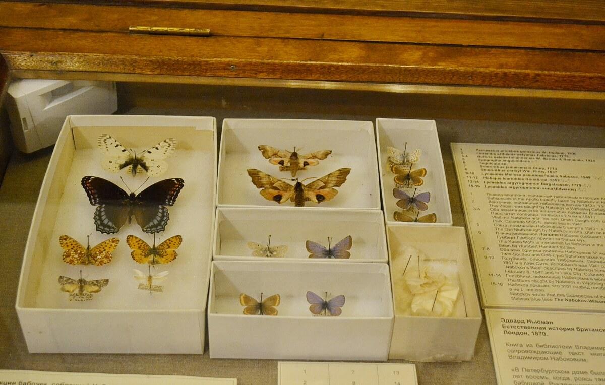 Коллекция бабочек В.Набокова