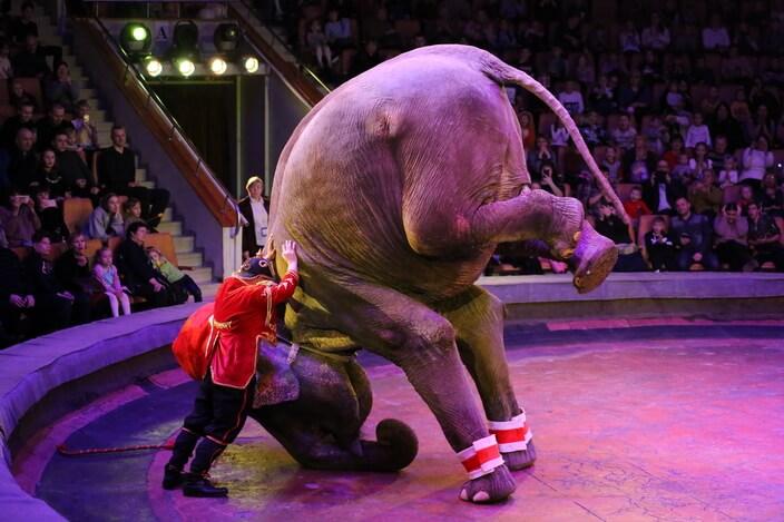 Шоу итальянского цирка Togni