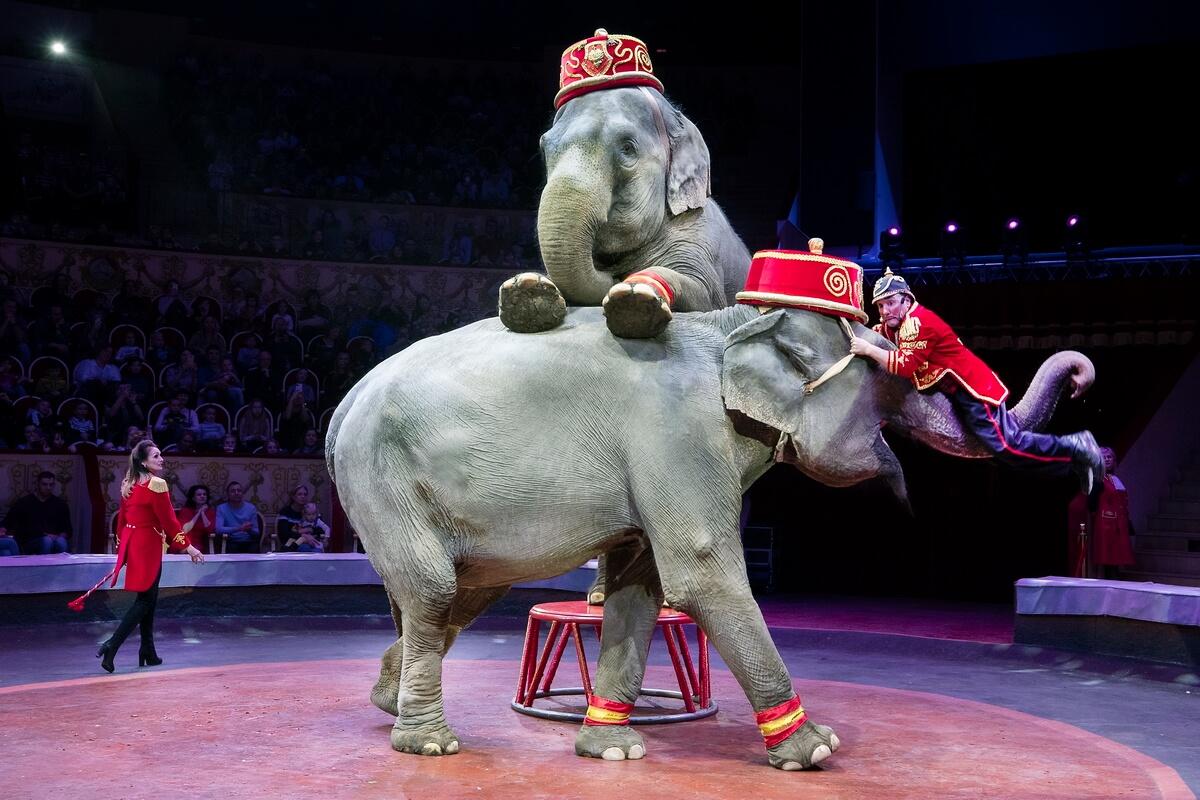 Коррадо и Сьюзан Тоньи со слонами