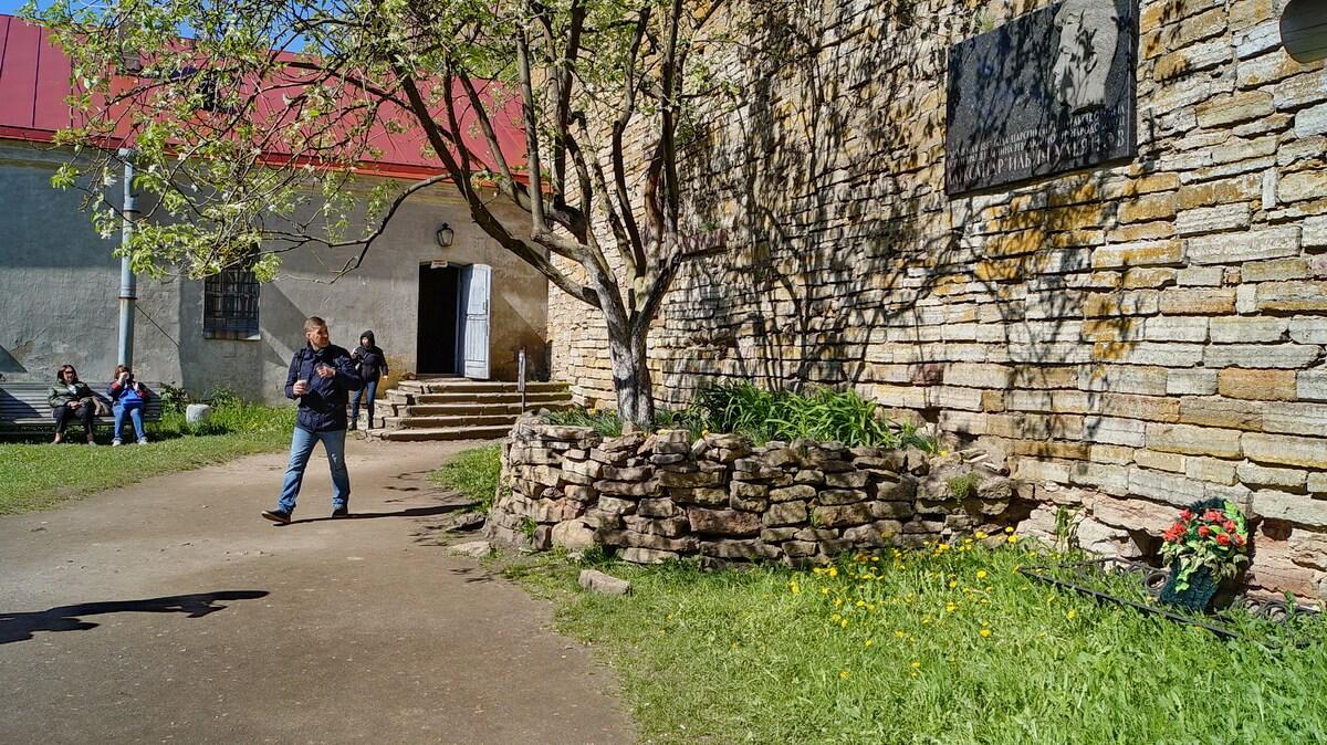 Яблоня на месте захоронения Александра Ульянова