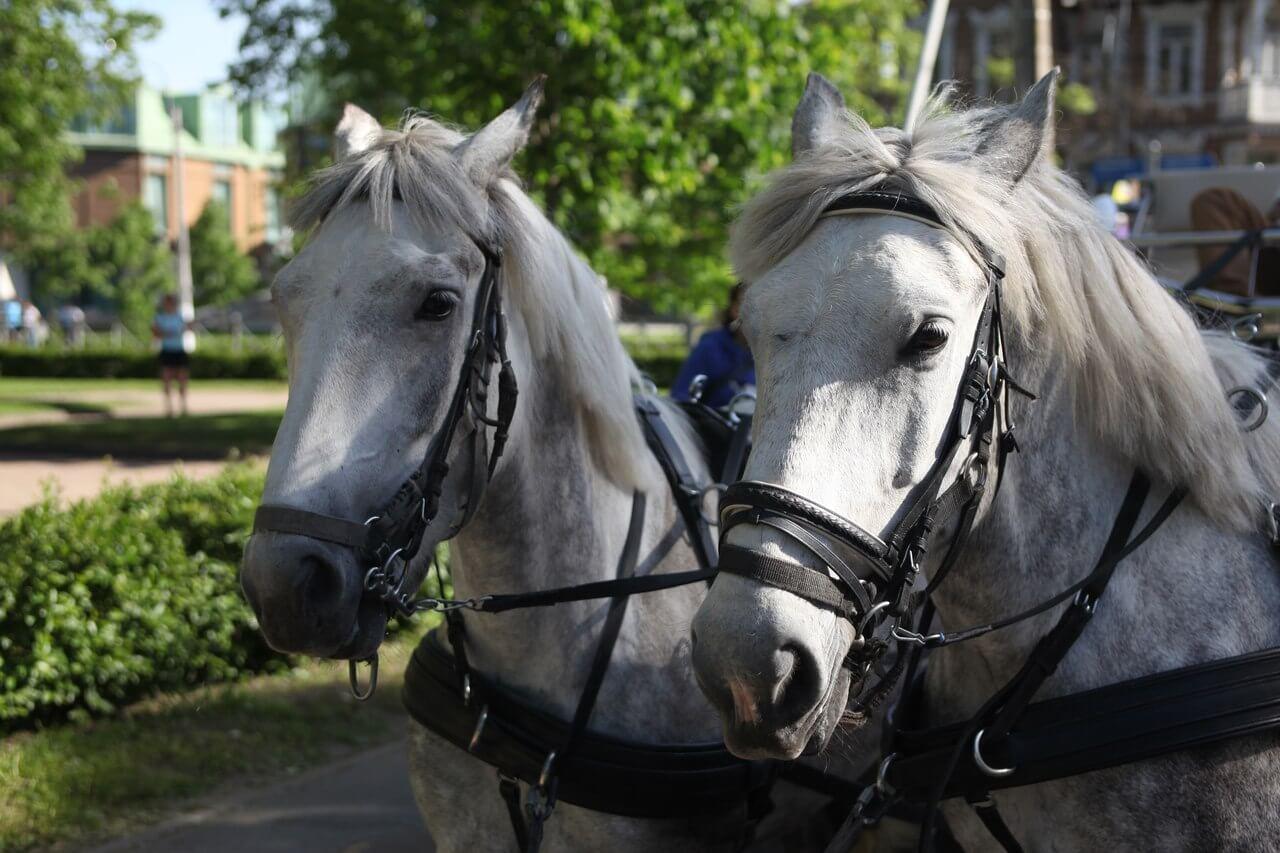 Прогулка в конном экипаже