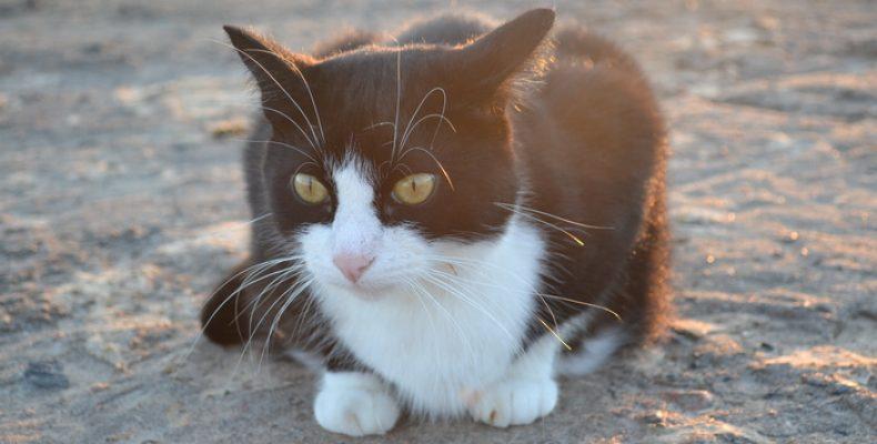 Выставка «Мир кошек» будет работать с 13 по 14 октября в Ленэкспо