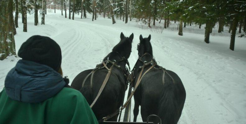 Катание на санях с лошадьми в Пушкине