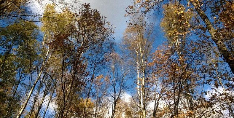 Список закрытых парков Петербурга с 28 марта по 14 июня