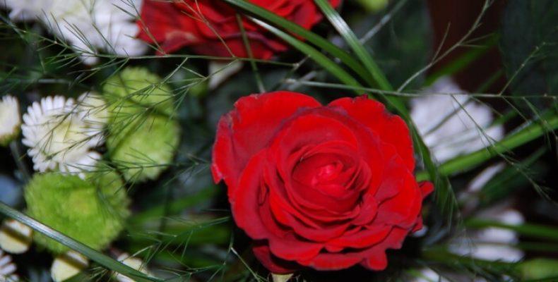 Цветы на 8 марта: инструкция по применению