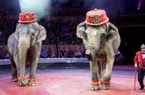 «Итальянский цирк Togni» в Петербурге открывает сезон