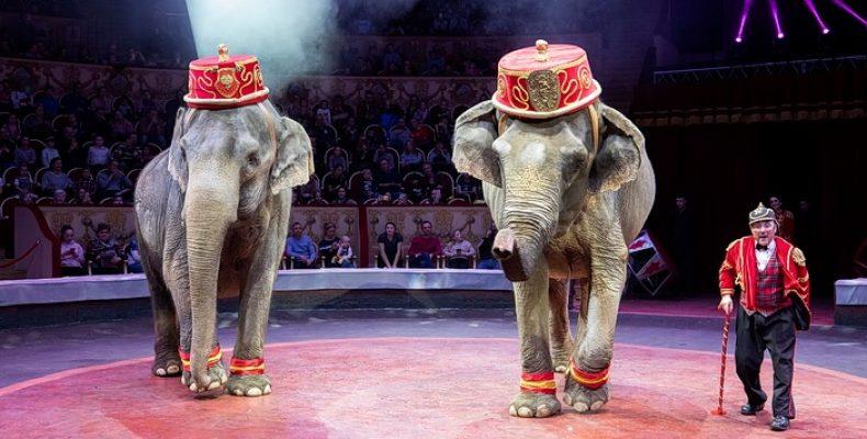 «Итальянский цирк Togni» в Петербурге с 22 февраля по 30 августа