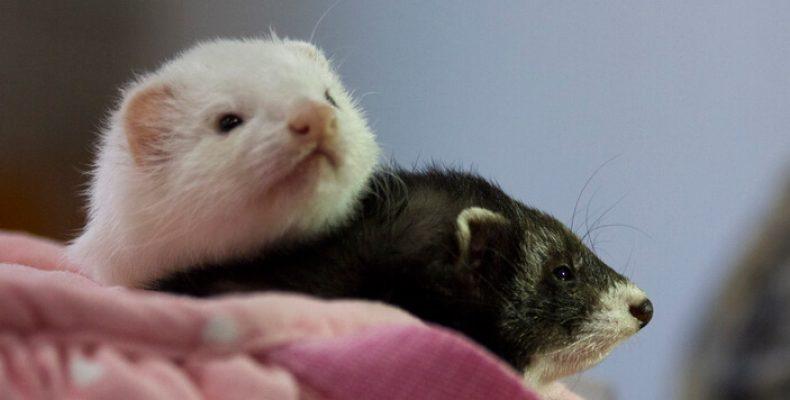 Выставка домашних животных «Зоошоу» пройдет в «Экспофоруме» 15 и 16 декабря