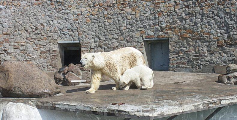 Ленинградский зоопарк опять работает